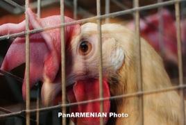 Ввоз мяса птицы из РФ в Армению запрещен