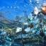 Группу островов в Индийском океане завалило 1 млн ботинок и 370,000 зубных щеток