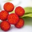 Brain disease linked to lychee toxins kills almost 50 children in India