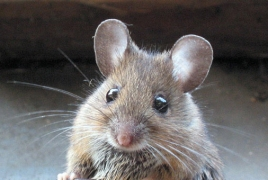 Mouse study discovers enzyme that prolongs life