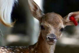 Five deer born at Yerevan Zoological Garden