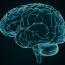Longitudinal decline in aging-related brain network integrity revealed