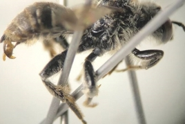 Rare bees discovered in Wisconsin