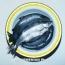 2018-ին ՀՀ-ից արտահանվել է մոտ  4000 տ ձուկ և 150 տ խավիար