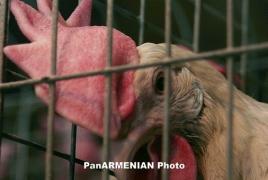 Ոստիկանությունը բացահայտել է 21 տարի առաջ 13 հավի գողությունը