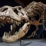 Tyrannosaurus rex had a built-in air conditioner: study