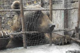 Կենդանիներին տանջելու, այդ թվում՝ կռվեցնելու համար քրեական պատիժ սահմանող օրինագիծն ԱԺ-ում է