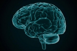 The more active your brain, the shorter your lifespan may be - study