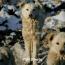 Երևանի կենդանաբանական այգում շները հոշոտել են կենգուրուներին