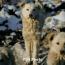 Կարապետյան. Կենդանաբանական այգու հարակից տարածքի թափառող շները վնասազերծվում են