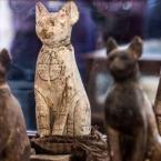 Egypt unveils mummified lion cubs, cats, crocodiles