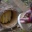 Մեղրի համտեսի սրահ Մարտունի գյուղում՝ NABU-ի և ԱԿԲԱ Ֆեդերացիայի աջակցությամբ