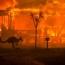 Австралии потребуется 100 лет для восстановления после пожаров