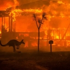 Australia to set lose billions due to bushfires across the country