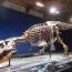 Названа причина исчезновения динозавров