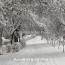 Հունվարի 23-ից Հայաստանում ձյուն է սպասվում