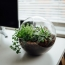 Keeping a plant on your desk could help reduce workplace stress
