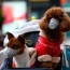 Dog in Hong Kong tests