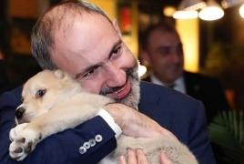 Премьер Армении получил в подарок еще одну собаку: Теперь у него их пять