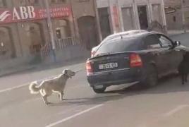 Երևանում շանը մեքենայով քարշ տված անձը ոստիկանություն է բերվել