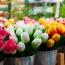 В Нидерландах уничтожают миллионы цветов: Их некому покупать