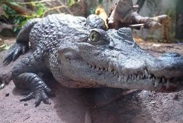 В Руанде мужчина нарушил карантин и пошел рыбачить: Его съел крокодил