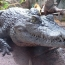 Rwandan man who breached coronavirus lockdown killed by crocodile