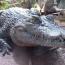 Rwandan man who breached coronavirus lockdown killed by crocodile