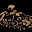 Homo antecessor is close relative to modern humans, Neanderthals: study