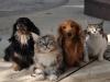 В китайском Шэньчжэне запретили есть кошек и собак