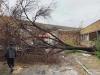 Երևանում փտած ծառեր են շրջվել քամուց