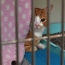 В США 2 кошки заразились коронавирусом