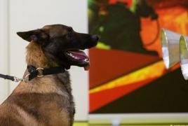 Ֆինն գիտնականներ․Շները հոտով կարող են կորոնավիրուս «ախտորոշել»