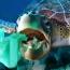 Ծով նետվող ձեռնոց-դիմակների թափոններն էկոլոգիական աղետի պատճառ կարող են դառնալ
