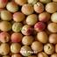 Փոխնախարար․ ՀՀ-ից պտուղ-բանջարեղենի արտահանումը նվազել է 15%-ով
