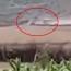 Ադրբեջանցի գյուղացու հրապարակած  տեսանյութում երևում է բեռնատարների շարժը դեպի սահման