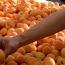 Адреса продажи армянских абриковов в Москве и Санкт-Петербурге
