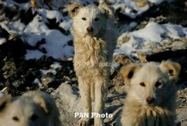 Italian study finds people can transmit coronavirus to pets