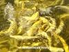 Սևանից ձկների ապօրինի արդյունահանման և արտահանման սխեմա է բացահայտվել