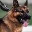 Dubai airport deploys coronavirus-sniffing dogs