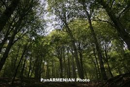 $10 մլն-ի դրամաշնորհ` ՀՀ-ի անտառների վերականգնմանը