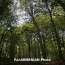 Армения получит $10 млн на восстановление лесов