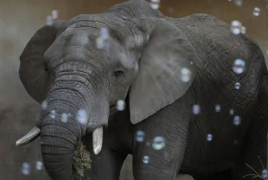 Warsaw zoo to give medical marijuana to stressed elephants