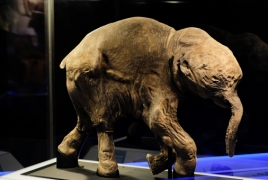 558 mammal species could be extinct by the end of the century