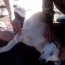 Ինչպես են հայ զինվորները վիրակապում վիրավոր շանը (Վիդեո)