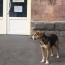 Շունը, վիրավոր զինվորի մեքենայի հետևից վազելով, հասել է Երևան
