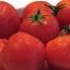 Ввоз в РФ томатов и перцев из Армавирской области Армении запрещен