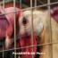 В Армении резко вырастет пошлина на мясо птицы: Министр предлагает основать производство на месте