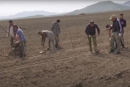 Карабахцы приступили к посадке винограда на очищенных саперами полях