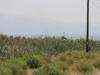 Azerbaijani army resumes shelling of Armenian posts